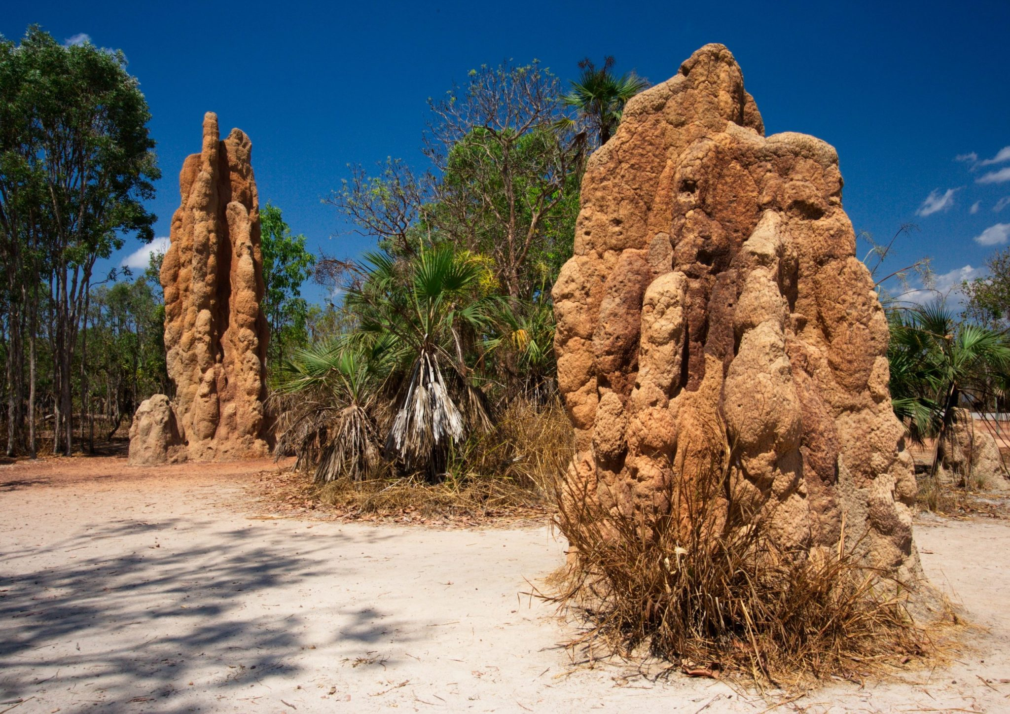 Magnetic Termite Mounds in Litchfield NP in Northern Territory in Australia