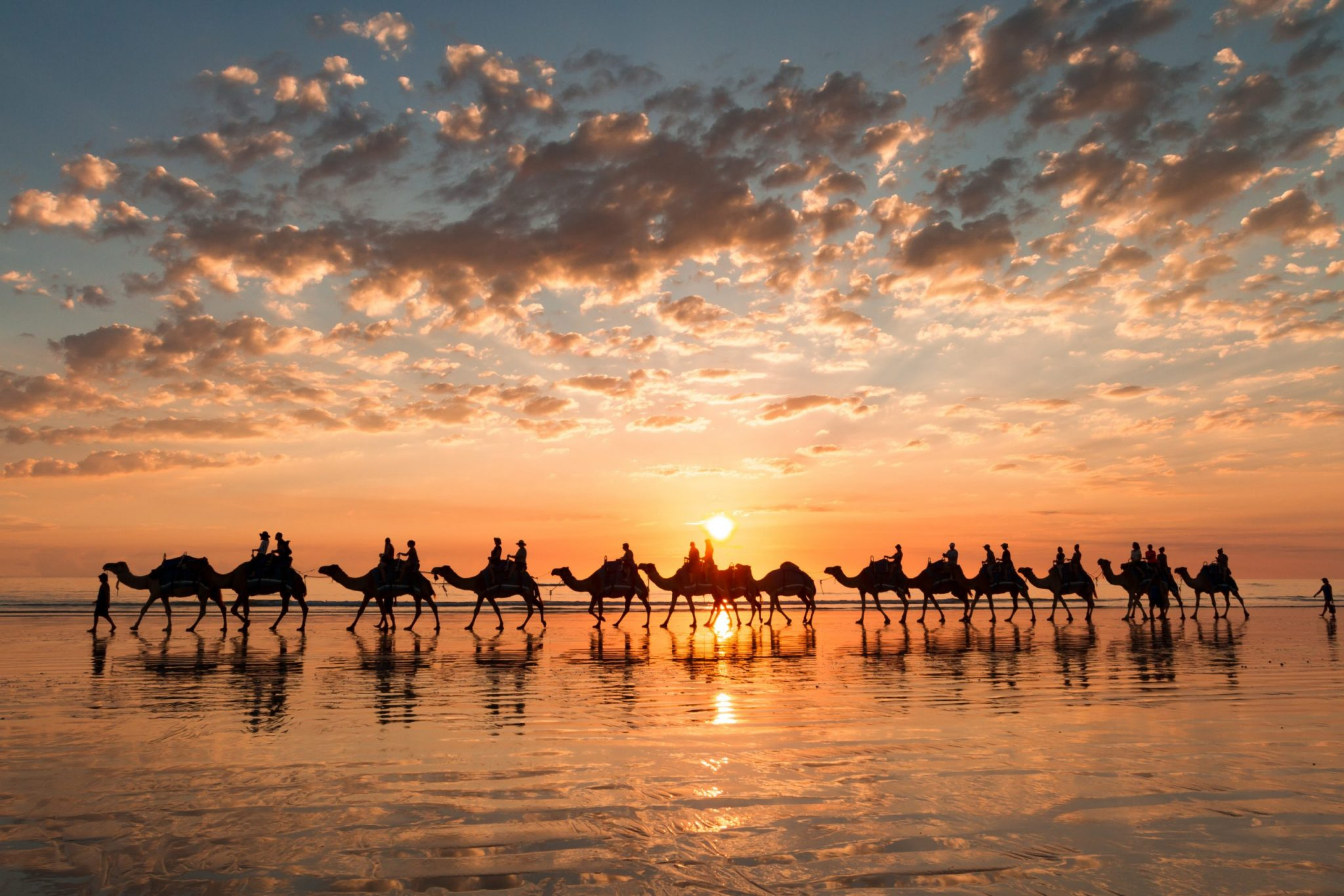 Broome, WA Sunset silhouette of the camels on Cable Beach, Broome, Western Australia.