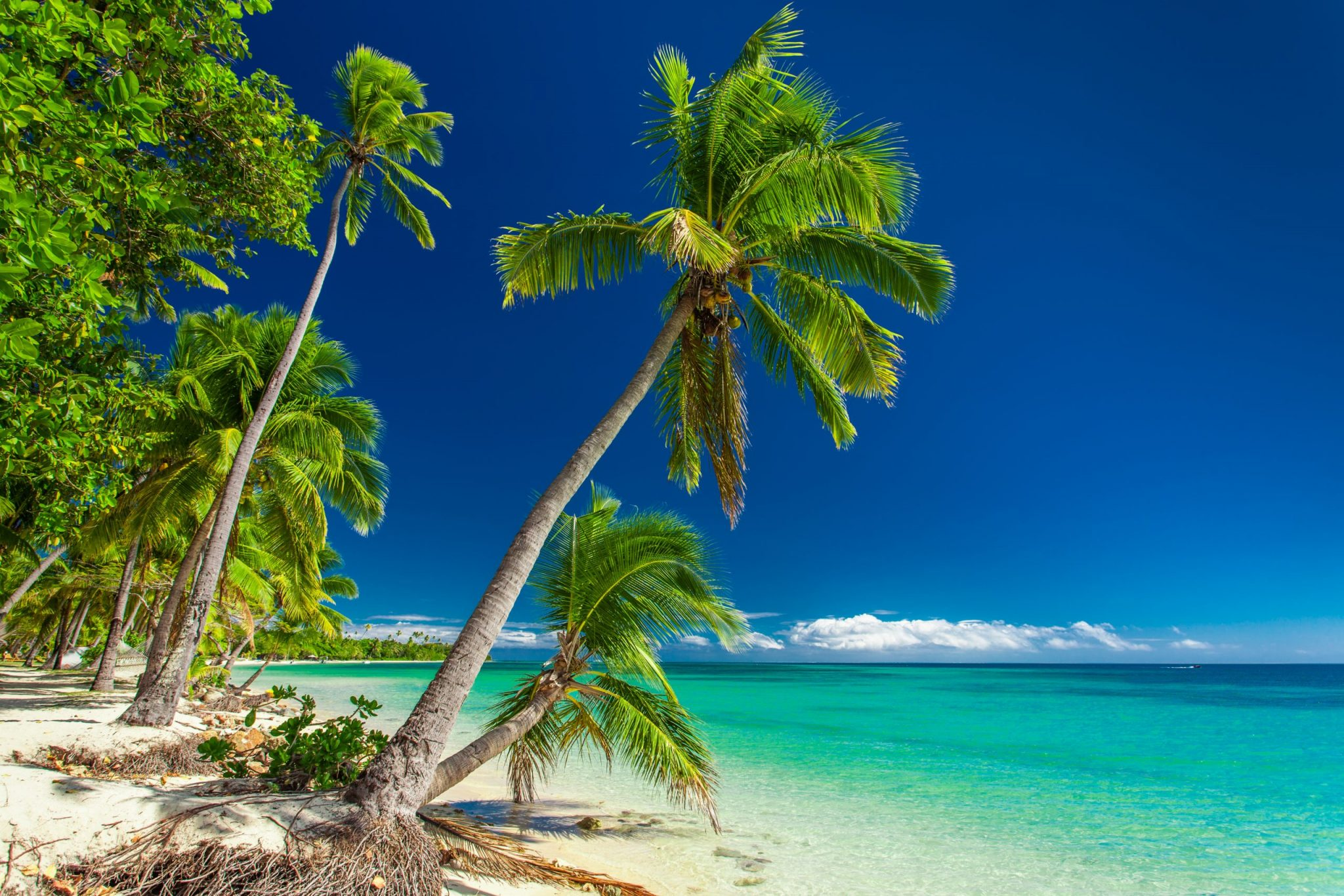 Tropical beach with palm trees on Fiji Islands