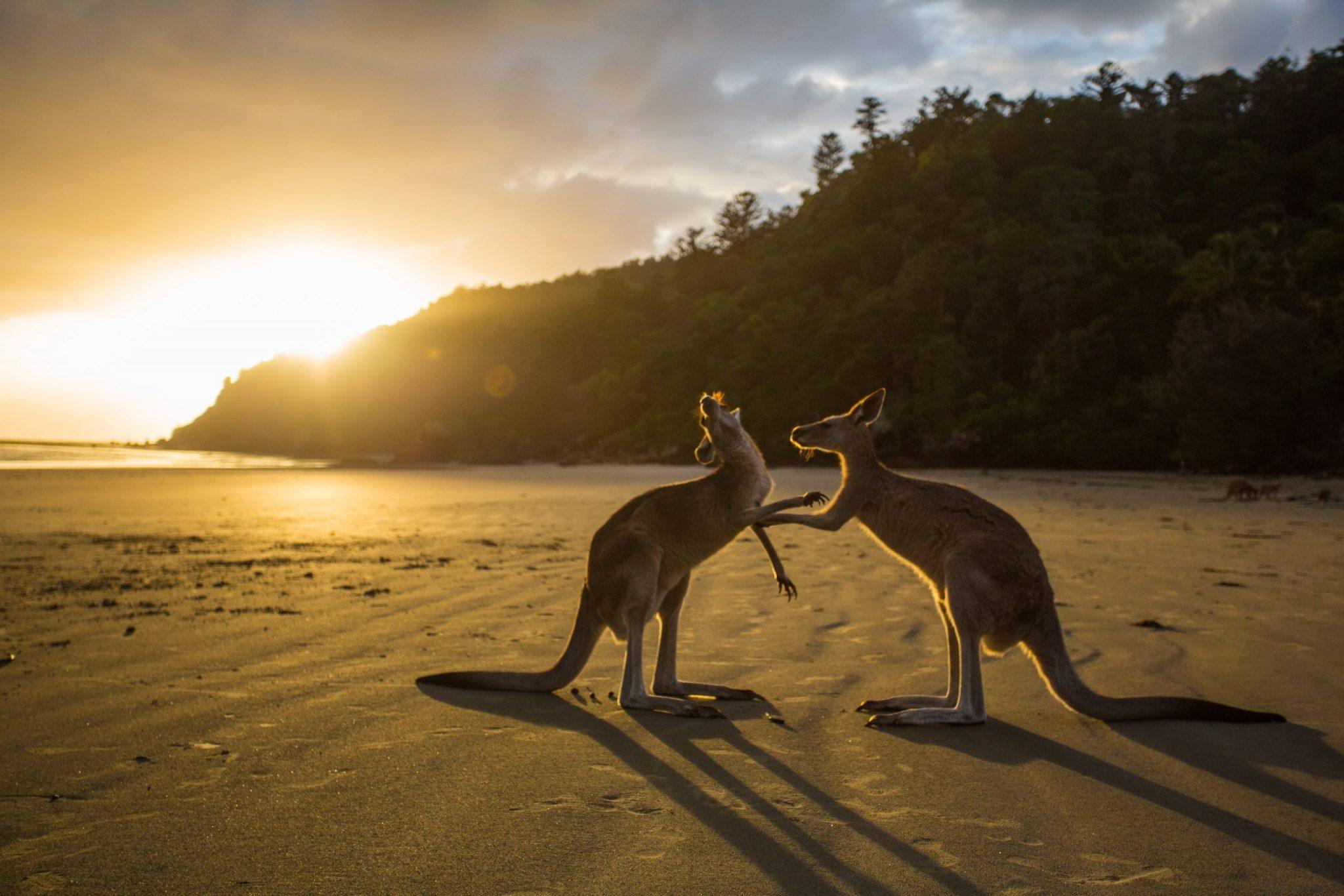 Sydney - klokaní pláž