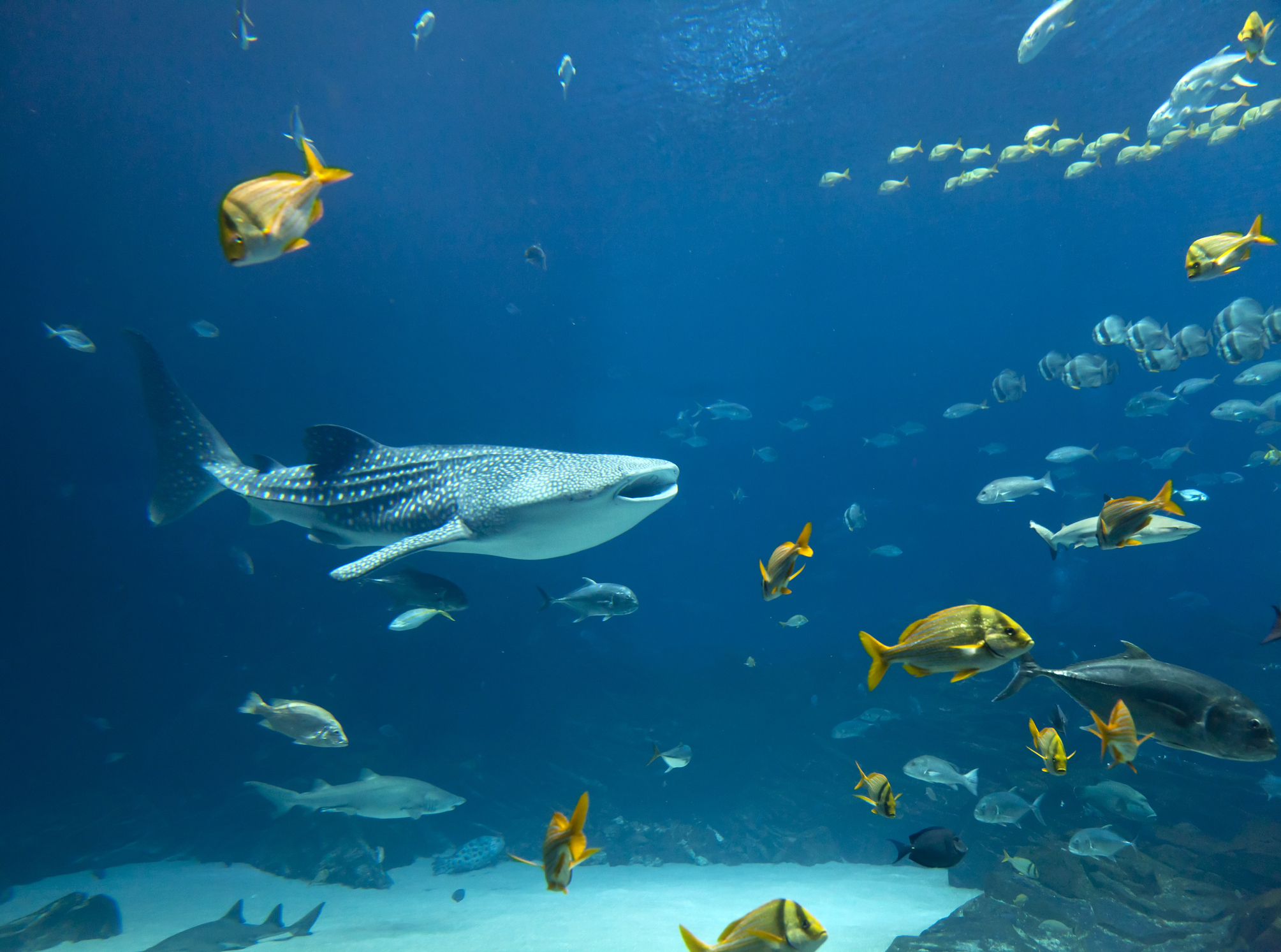 Ningaloo Reef - Exmouth
