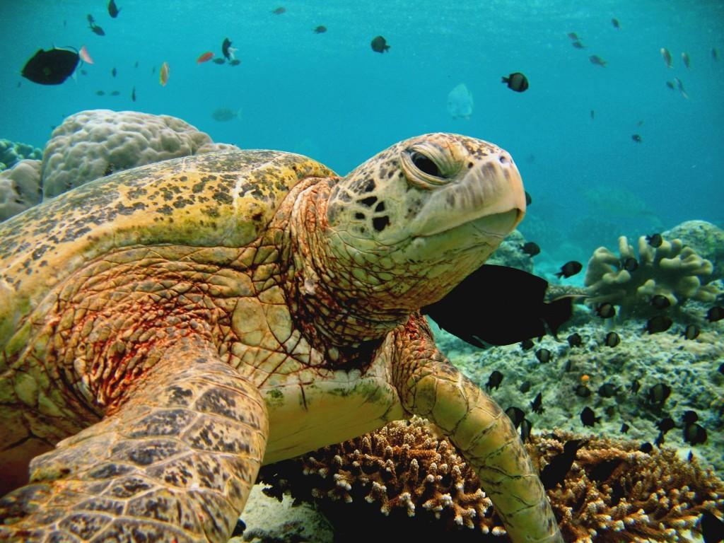 Cairns a Velký bariérový útes